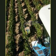 Vue des vignes depuis la machine à vendanger