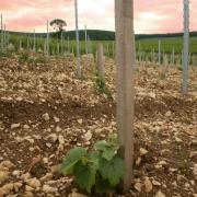 Plantation avec ciel couchant